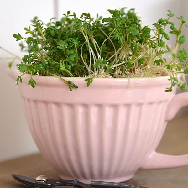 Mixing Bowl Mynte Mini - English Rose - Pink