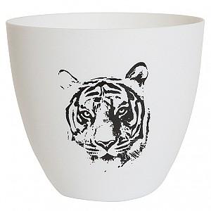 Candlecup Tiger