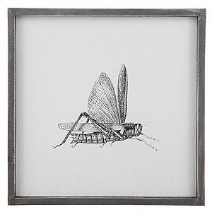 Tavla Insekt Gräshoppa