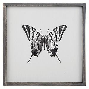 Tavla Insekt Fjäril