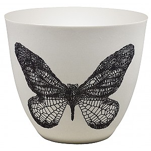 Candlecup Butterfly