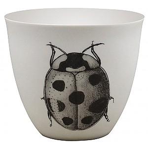 Candlecup Ladybug