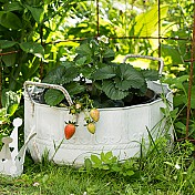 Krukor & Planteringsk�rl